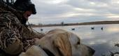 View the Album: Duck Hunting  6 images